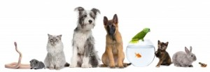 drinking water for pets