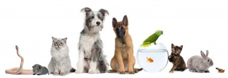 Distilled water for your pets
