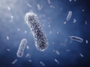 BacteriaContamination