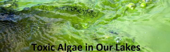 Toxic Algae in Our Lakes and Distilled Water