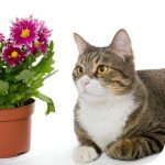 cat and plant thumb